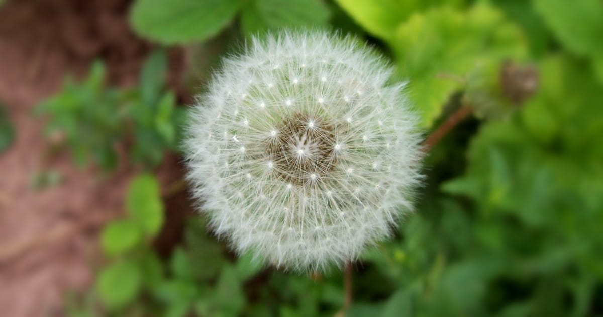 Reiki-For-Allergies-Wolf-Healing-Ottawa